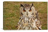 Wide eyed Eagle Owl, Canvas Print