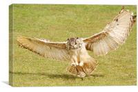 Eagle Owl Landing, Canvas Print