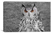 Bright Eyed Eagle Owl, Canvas Print