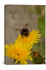 Bee on Dandelion, Canvas Print