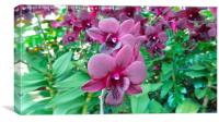 Beetroot Orchid, Canvas Print
