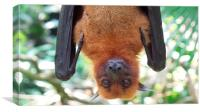 Up close and personal with a fruit bat, Canvas Print