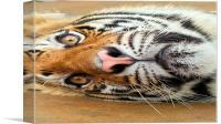 Tiger Tiger Burning Bright, Canvas Print
