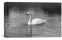 Peaceful swan, Canvas Print