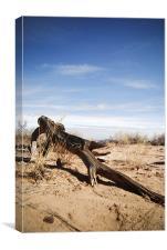 desert driftwood, Canvas Print