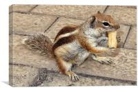 Chipmunk, Canvas Print
