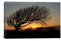 Sunset Silhoutte Tree, Canvas Print