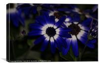Blue daisy, Canvas Print