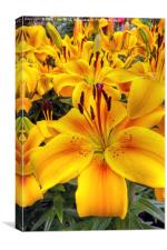 Yellow and Orange Lilies, Canvas Print