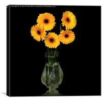 Yellow Gerberas in a glass vase, Canvas Print