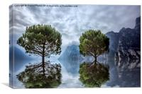 Tree reflections , Canvas Print