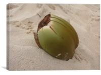 Coconut, Canvas Print