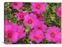 Pink flowers, Canvas Print