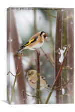Goldfinch Christmas, Canvas Print