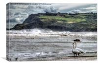 Swans on the Beach - Robin Hoods Bay, Canvas Print