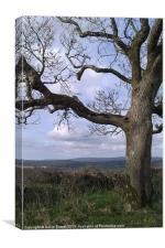 Exmoor tree, Canvas Print