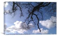 Tree branches sky., Canvas Print