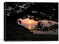 Sunset through tree north devon, Canvas Print