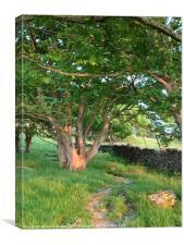 Tree view north devon, Canvas Print