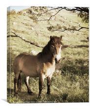 Pony valley of the rocks north devon, Canvas Print