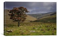 Lonely Tree on Cross Fell, Canvas Print