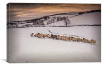 Snow Sheep, Canvas Print