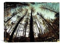 Tree perspective, Canvas Print