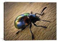 Beetle Bug, Canvas Print