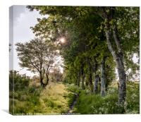 The path by the birch trees, Canvas Print