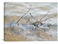 Branches in water, Canvas Print
