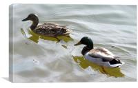 Swimming ducks, Canvas Print