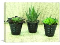 Pot plants, Canvas Print