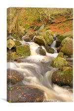 Woodland Stream In Autumn, Canvas Print