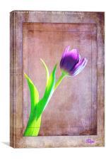 Textured Tulip
