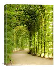 Alnwick Gardens Tunnel, Secluded Walkway, Canvas Print