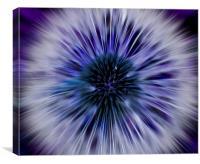 Purple Zoom Burst Dandelion, Canvas Print
