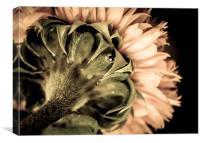 Behind a Sunflower, Canvas Print