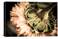 Behind a Sunflower II, Canvas Print
