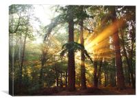 New Forest Dawn, Canvas Print