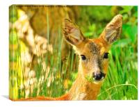 Oh Deer !, Canvas Print