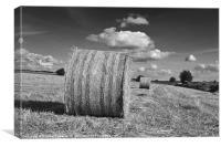Round straw bales, Canvas Print