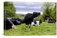 Cattle in a field, Canvas Print