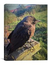 The Lonely Jackdaw Sits on the Fencepost, Canvas Print