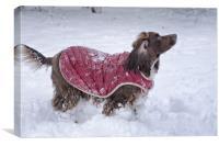 Snow Dog, Canvas Print