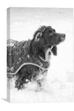 Snow Plough, Canvas Print