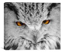 Owl Eyes 2, Canvas Print