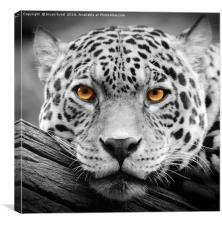 Jaguar wall art, Canvas Print
