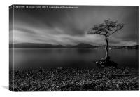 Milarrochy Bay Low Key, Canvas Print