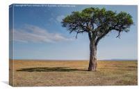 Maasai Mara, Canvas Print