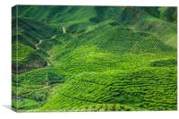 Cameron Highlands, Canvas Print